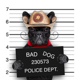 Mexican Mugshot Dog Photographic Print by Javier Brosch