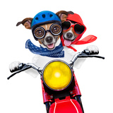 Motorbike Couple of Dogs Prints by Javier Brosch