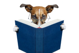 Reading Book Dog Photographic Print by Javier Brosch