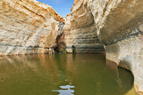 Unique Canyon in the Desert. Picturesque Canyon Ein-Avdat in the Negev Desert. Sandstone Canyon Wal Photographic Print by  kavram
