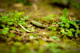 Colorful Caterpiller Photographic Print by Mr Doomits