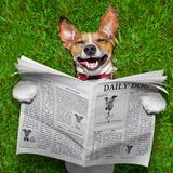 Dog Reading Newspaper Photographic Print by Javier Brosch