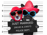 Just Married Mugshot Posters by Javier Brosch