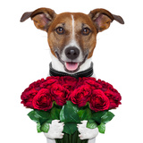 Valentine Dog Photographic Print by Javier Brosch