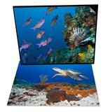 Sea Turtle Cozumel, Mexico & Creole Wrasse and Lionfish, Roatan, Bay Islands, Honduras Set Prints by Antonio Busiello