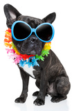 Holiday Summer Dog Photographic Print by Javier Brosch