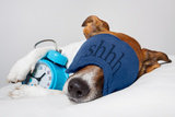 Dog Sleeping with Alarm Clock and Sleeping Mask Photographic Print by Javier Brosch