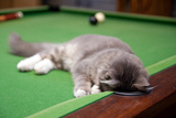 Pool Kitty Photographic Print by (c) Chris Gin