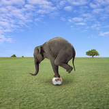 Elephant Balancing on Football Photographic Print by Bob Elsdale