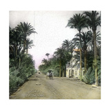 Elche (Spain), the Main Road of Alicante, Circa 1885-1890 Photographic Print by Levy et Fils, Leon
