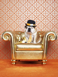 English Bulldog (Canis Lupus Familiaris) on Chair Photographic Print by Catherine Ledner