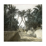 Elche (Spain), a Street, Circa 1885-1890 Photographic Print by Levy et Fils, Leon