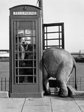 Trunk Call Photographic Print by John Drysdale
