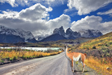 Neverland Patagonia. Lake Pehoe, Graceful Guanaco on Gravel Road. Away in the Clouds - the Cliffs O Photographic Print by  kavram
