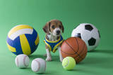 Beagle Puppy and Sports Photographic Print by  MIXA