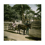 Donkey-Drawn Carriage at the Jardin D'Acclimatation, Paris (XVIth Arrondissement), Circa 1890-1895 Photographic Print by Levy et Fils, Leon