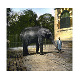 Elephant at the Jardin Des Plantes, Paris (Vth Arrondissement), Circa 1895-1900 Photographic Print by Levy et Fils, Leon