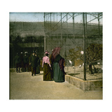Aviaries at the Jardin D'Acclimatation, Paris (XVIth Arrondissement), Circa 1890-1895 Photographic Print by Levy et Fils, Leon
