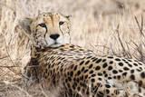 Cheetah Photographic Print by PHOTO BY PRASIT CHANSAREEKORN