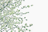 White Spring Blossom and Green Sprigs Photographic Print by Gregor Schuster