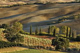 Vineyard and Olive Groves among Agricultural Field Photographic Print by Adam Jones