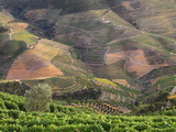 Portugal, Douro, Terraced Vineyards Photographic Print by Shaun Egan