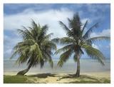 Palm trees, Agana Beach, Guam Poster by Tim Fitzharris
