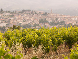Vineyard at Cadiere D'azur, near Bandol, France Photographic Print by Cultura Travel/Philip Lee Harvey