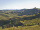 Barolo Landscape Photographic Print by Ascent Xmedia