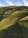 Portugal, Douro, Terraced Vineyards and House Photographic Print by Shaun Egan