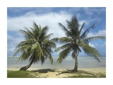 Palm trees, Agana Beach, Guam Plakater af Tim Fitzharris