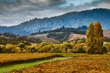 Vineyard with Fall Colors Photographic Print by Bob Cornelis