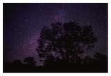 Starry sky with silhouetted Oak tree Posters by Tim Fitzharris