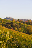 Vineyards in Stuttgart, Germany Photographic Print by Werner Dieterich