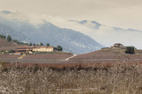Santa Cruz Vineyard in Colchagua Valley Photographic Print by Luis Davilla