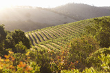 Tranqui Napa Valley Scene Backlit by Warm Sunlight Photographic Print by Billy Hustace