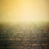 Vineyard in Mist Photographic Print by Paul Grand Image