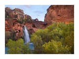 Havasu Falls, Grand Canyon, Arizona Posters by Tim Fitzharris