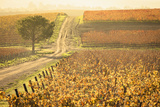 Edna Valley Wine Area Photographic Print by David Madison