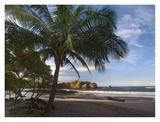 Palm trees line Pelada Beach, Costa Rica Posters par Tim Fitzharris