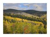 Cooper's Hawk, Santa Fe National Forest, Sangre de Cristo Mountains, New Mexico Prints by Tim Fitzharris