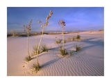 White Sands National Monument, New Mexico Prints by Tim Fitzharris