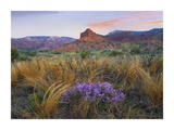 Caprock Canyons State Park, Texas Print by Tim Fitzharris