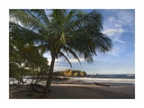 Palm trees line Pelada Beach, Costa Rica Prints by Tim Fitzharris