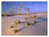 White Sands National Monument, New Mexico Posters by Tim Fitzharris