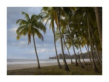 Palm trees line Carillo Beach, Costa Rica Prints by Tim Fitzharris