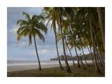Palm trees line Carillo Beach, Costa Rica Prints by Tim Fitzharris