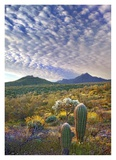 Saguaro and Teddybear Cholla amid flowering Lupine and California Brittlebush Art by Tim Fitzharris