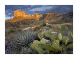 Opuntia cactus and Agave, Guadalupe Mountains National Park, Chihuahuan Desert, Texas Posters by Tim Fitzharris