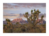 Joshua Tree and Spring Mountains, Red Rock Canyon National Conservation Area, Nevada Prints by Tim Fitzharris